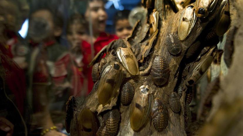 Учёные обнаружили новый вид тараканов, устойчивых к яду