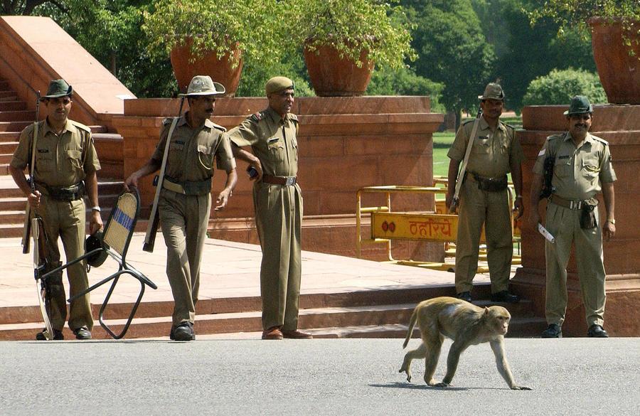 Охранники в костюмах обезьян будут защищать парламент Индии от макак