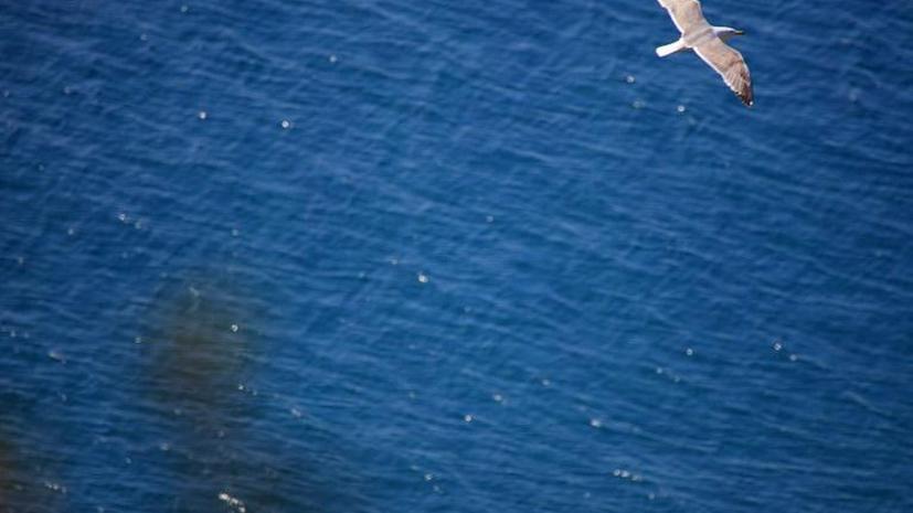 В США отец и сын утонули, испытывая снаряжение для дайвинга