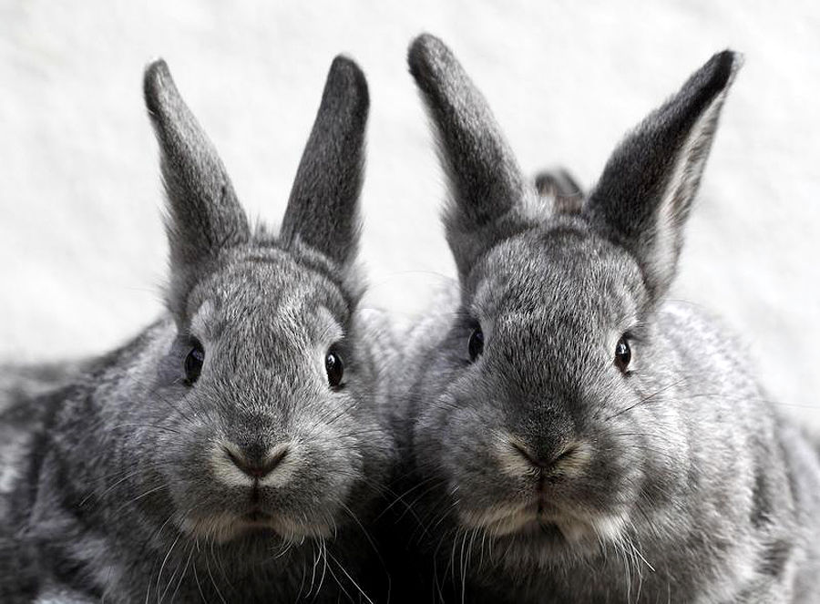 Европейцы больше не будут испытывать косметику на животных