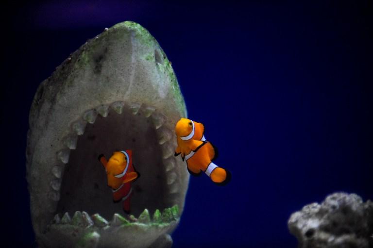 Ученые установили, что мозг акулы во многом похож на человеческий