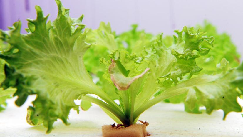 NASA будет выращивать салат в космосе