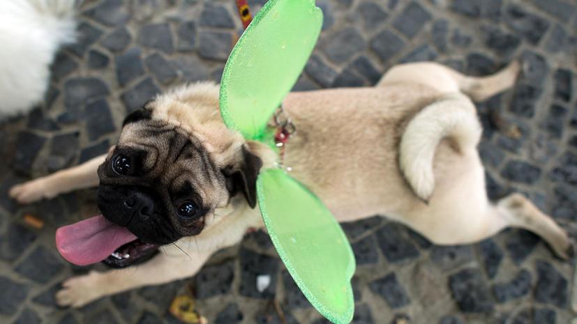 Все собаки в Англии будут «чипированы» к 2016 году
