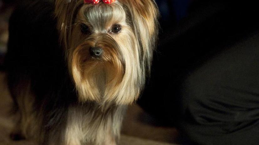 В США собака по ошибке получила человеческую медицинскую страховку