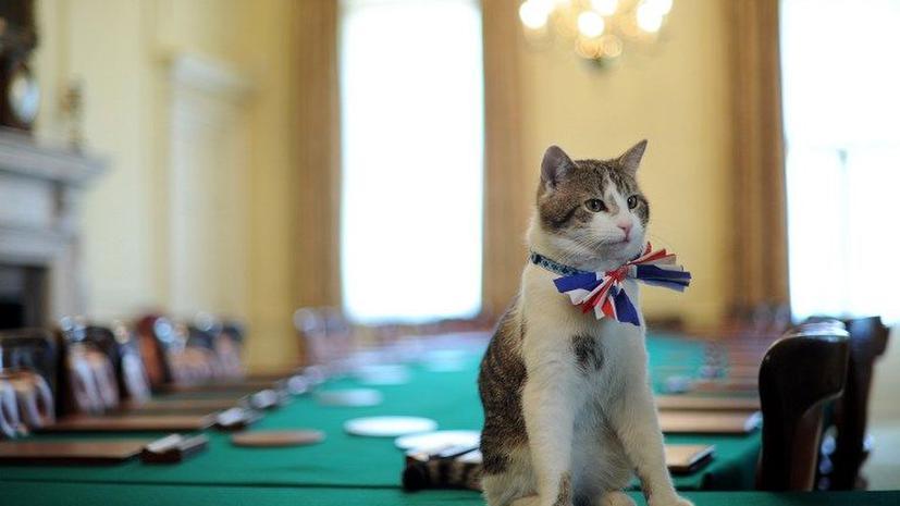 В Великобритании появится интерактивная кошачья карта