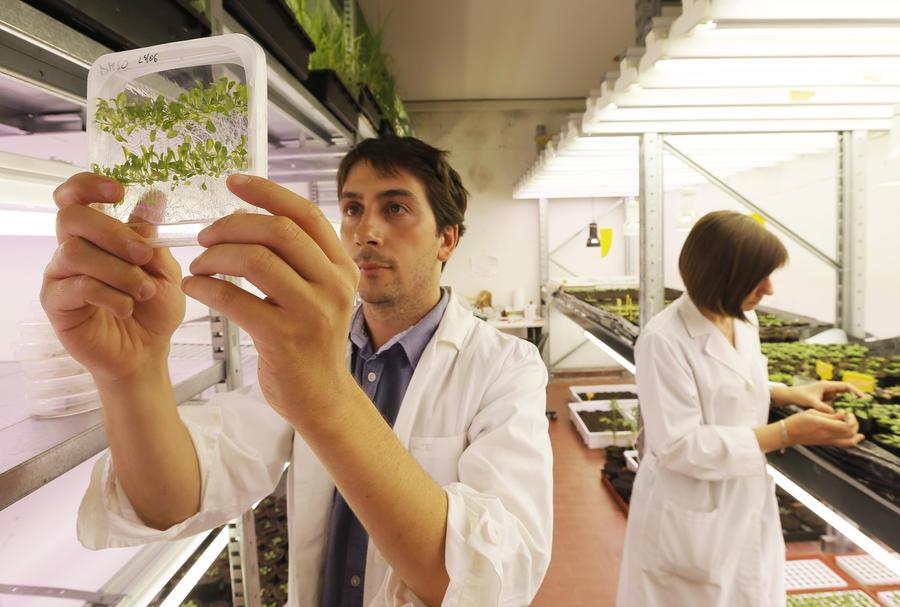Учёные: Будущее — за бионическими растениями