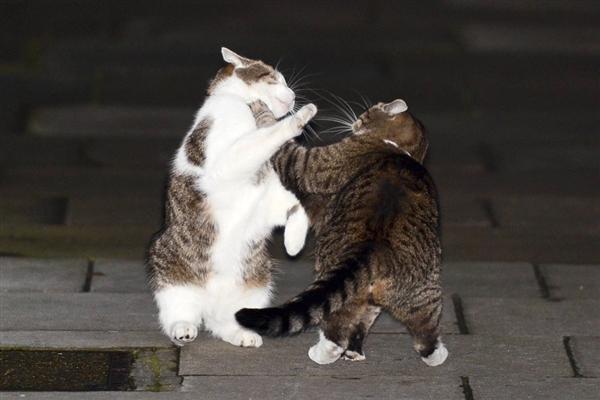 Кошка Осборна надрала уши «главному мышелову» Великобритании у стен Даунинг-стрит