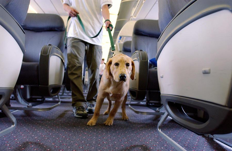 В США пассажиры самолёта отказались лететь из-за того, что с рейса сняли инвалида