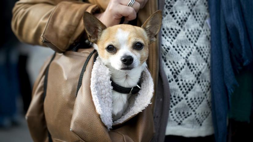 Собаки-миллионеры: Forbes опубликовал список самых богатых животных планеты