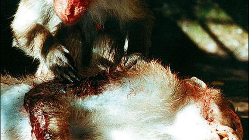 Гражданин Нигерии вёз в США необычный багаж - мясо слона и мёртвых обезьянок