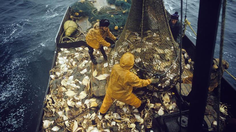 Из России в Японию нелегально вывозят тысячи тонн морепродуктов