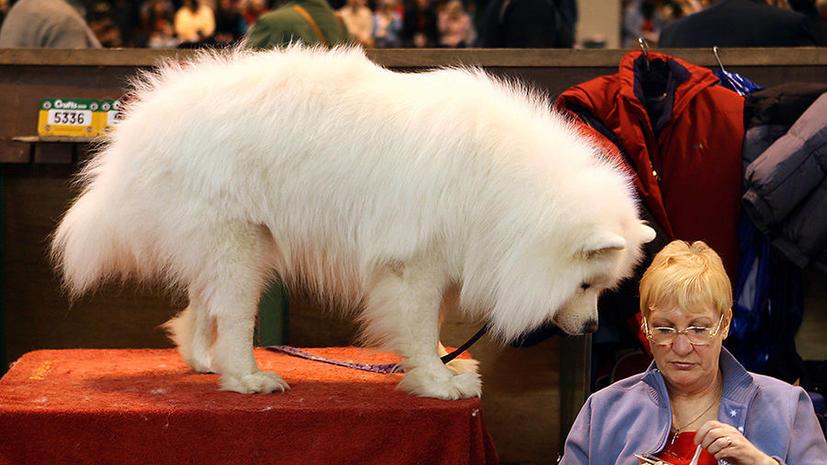 Ученые: Волки превратились в собак из-за еды