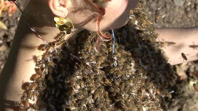 Танцующая с пчелами: в США женщина медитирует с тысячами насекомых на теле