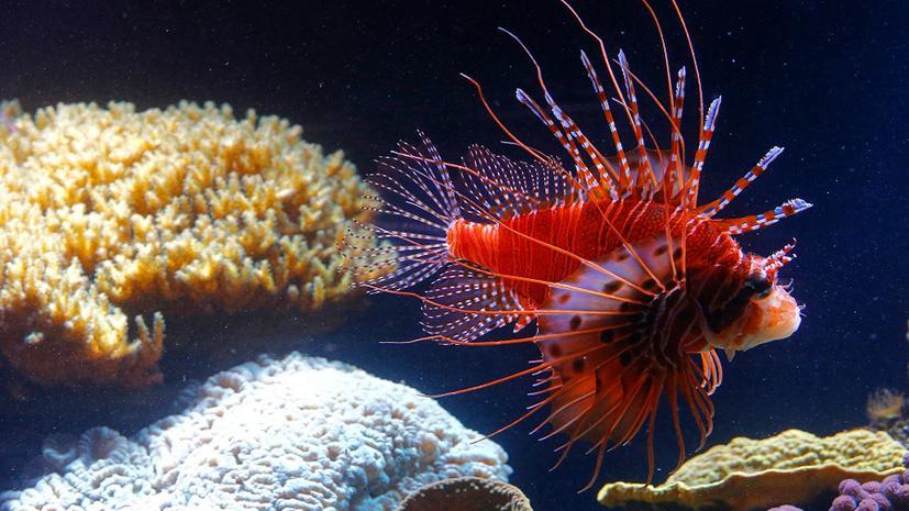 Испанские ученые поставили рыб на ноги