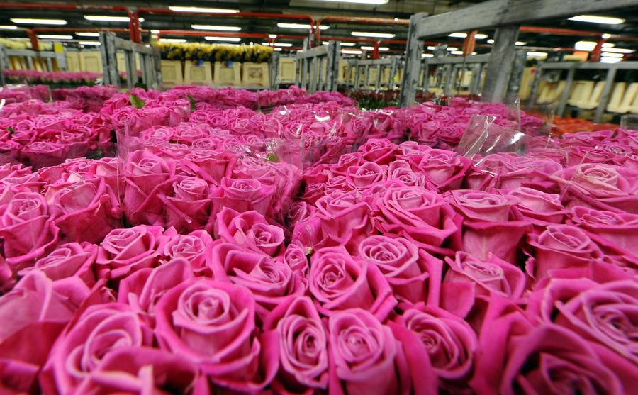 Минсельхоз РФ: Россия в ответ на санкции может ограничить ввоз цветов и кондитерских изделий