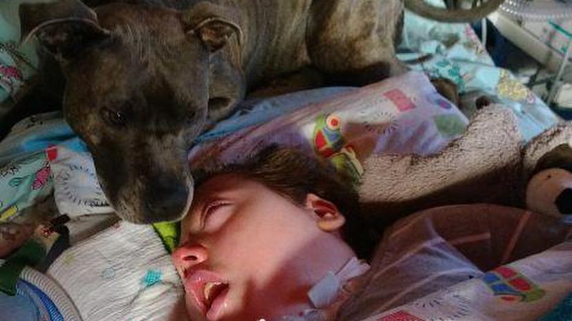 У немецкого мальчика, находящегося в коме, чиновники могут отнять собаку