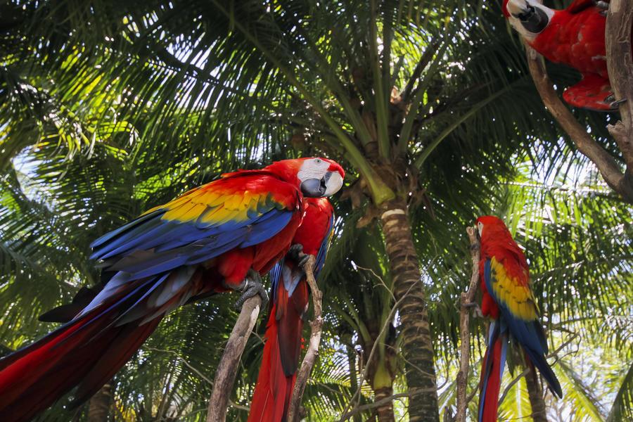 Латиноамериканские государства создадут единую туристическую визу