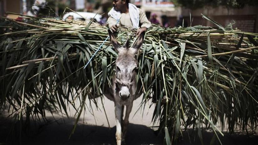 В Египте арестовали крестьянина, назвавшего своего осла в честь министра обороны