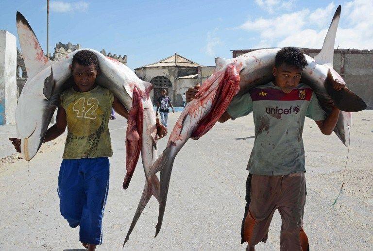 Ученые: Акулам грозит вымирание из-за безответственности человека