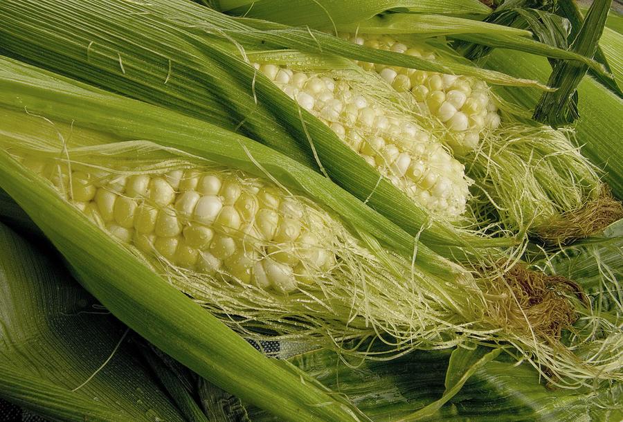 Китай отказался от генетически модифицированной американской кукурузы