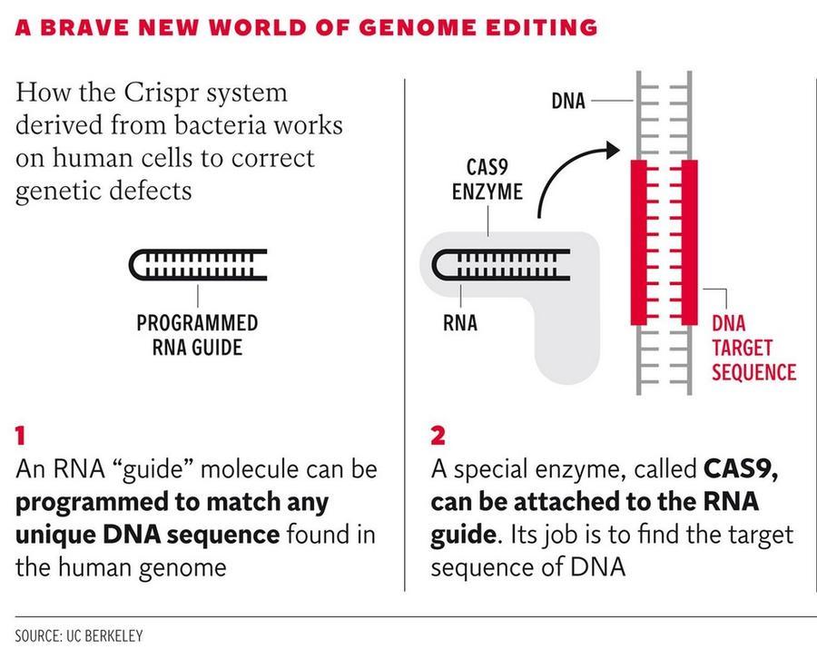 Создана технология, позволяющая безопасно редактировать геном человека