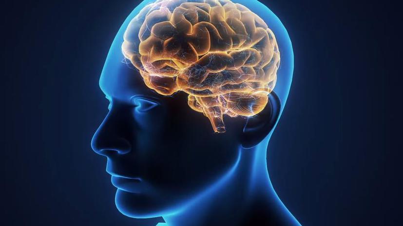 Учёные из Калифорнийского университета научились стирать и восстанавливать память