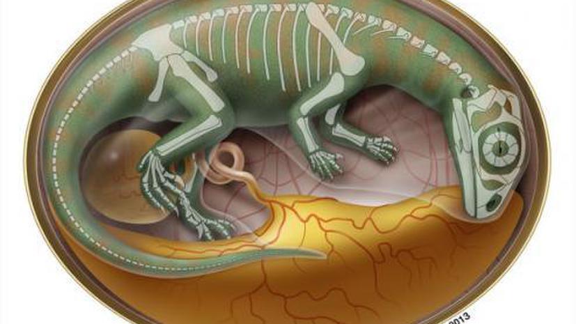 Ученые нашли древнейшее кладбище зародышей динозавров