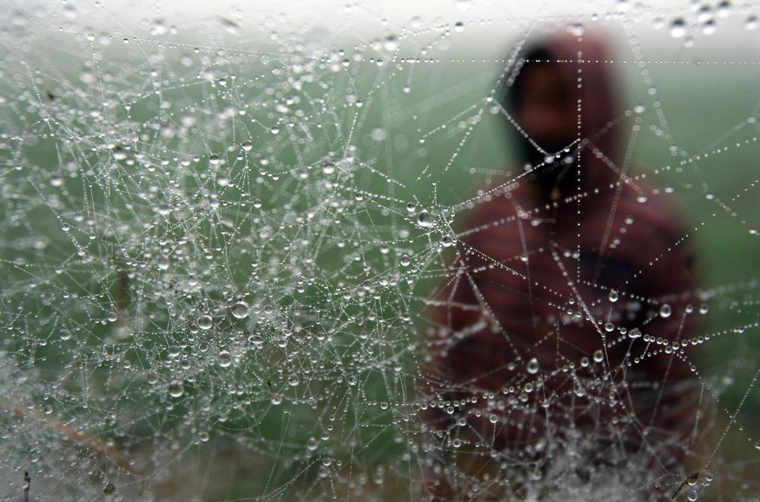 В Бразилии идут дожди из пауков