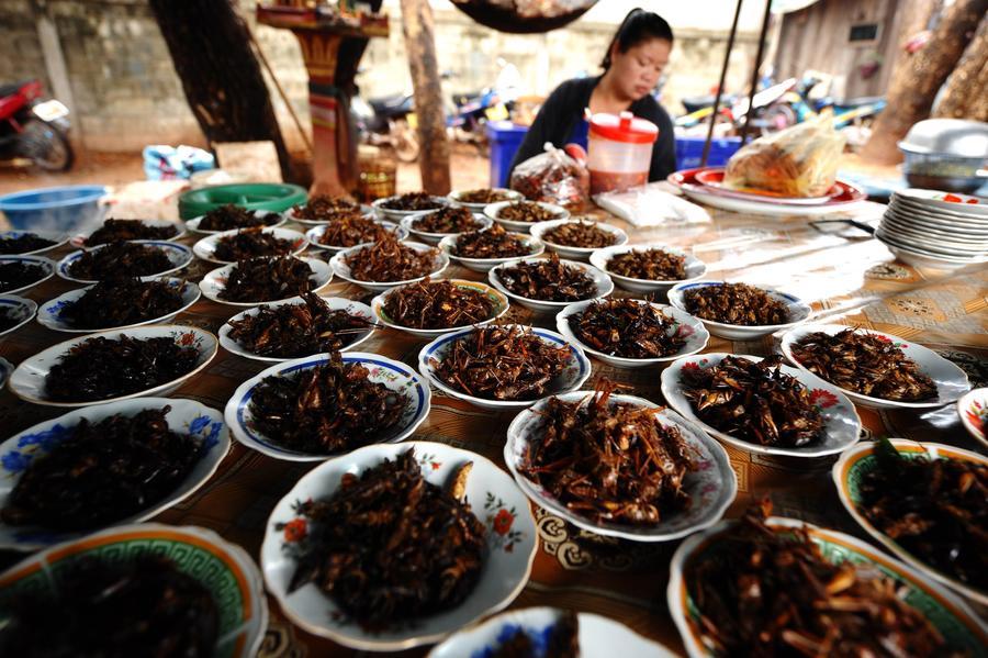ООН предлагает включить насекомых в рацион людей по всему миру для победы над голодом