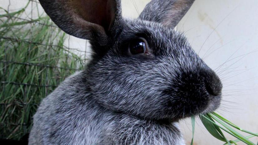 Кролик, принимающий ванну с пеной, стал звездой Youtube
