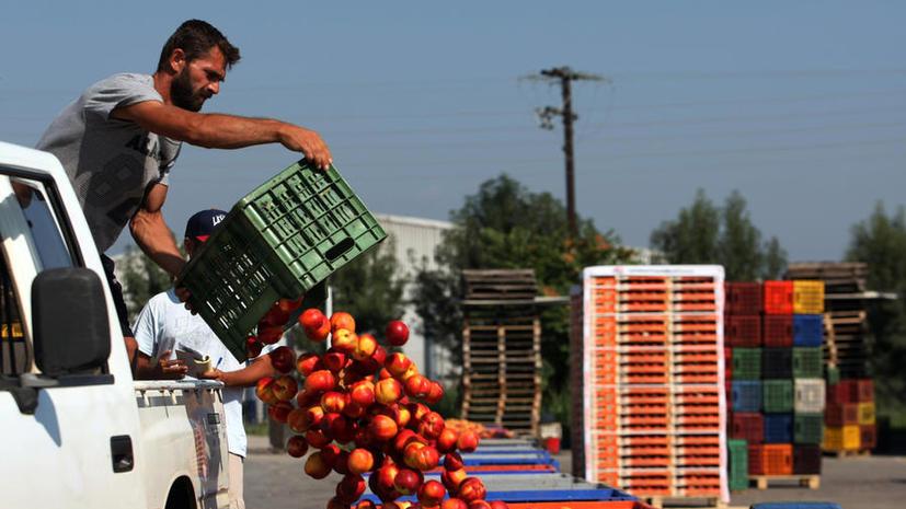 Обмен санкциями между Россией и ЕС грозит разорением греческим фермерам