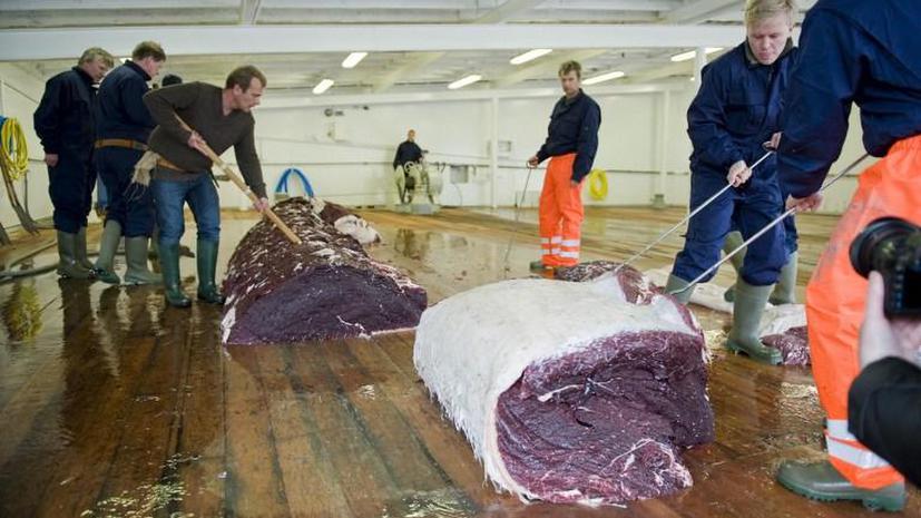 Японцы кормят собак мясом вымирающих видов китов