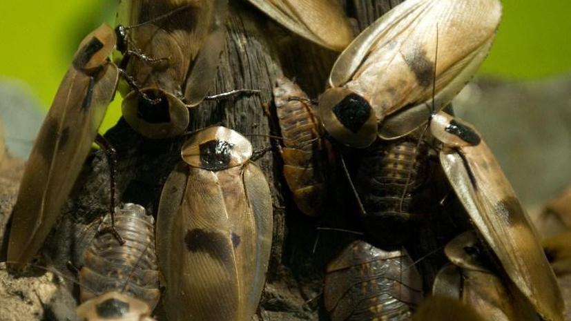 С китайской фермы сбежал миллион тараканов