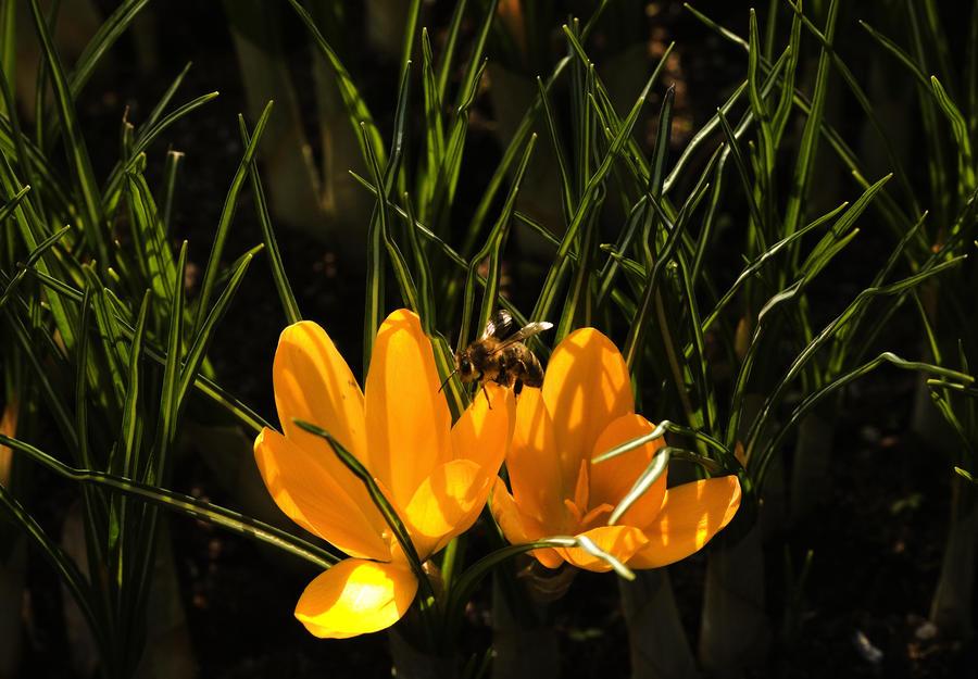 В Норвегии появился первый в мире «пчелиный хайвей»