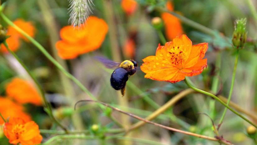 Одобрение нового пестицида в США привело к массовой гибели пчёл