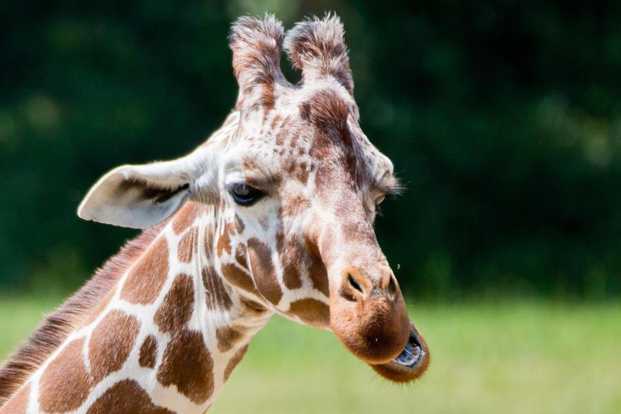 Учёные доказали, что раньше Грецию населяли жирафы, слоны и носороги