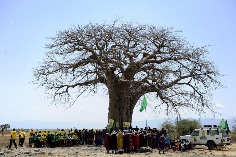 31 человек погиб в результате падения дерева в Нигерии