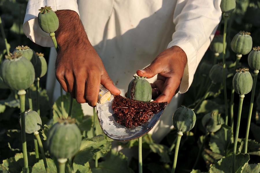 Отчёт: Афганистан рискует превратиться в «нарко-криминальное» государство