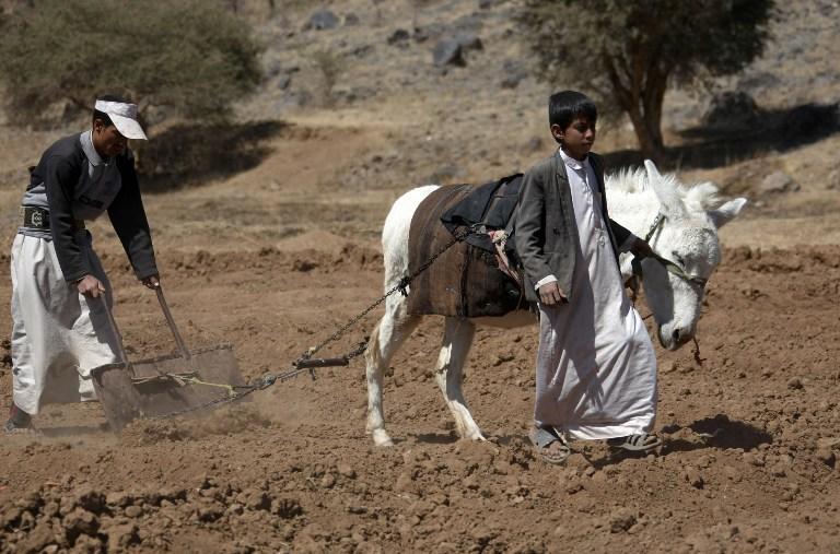 Наркотик кат может стать причиной засухи в столице Йемена