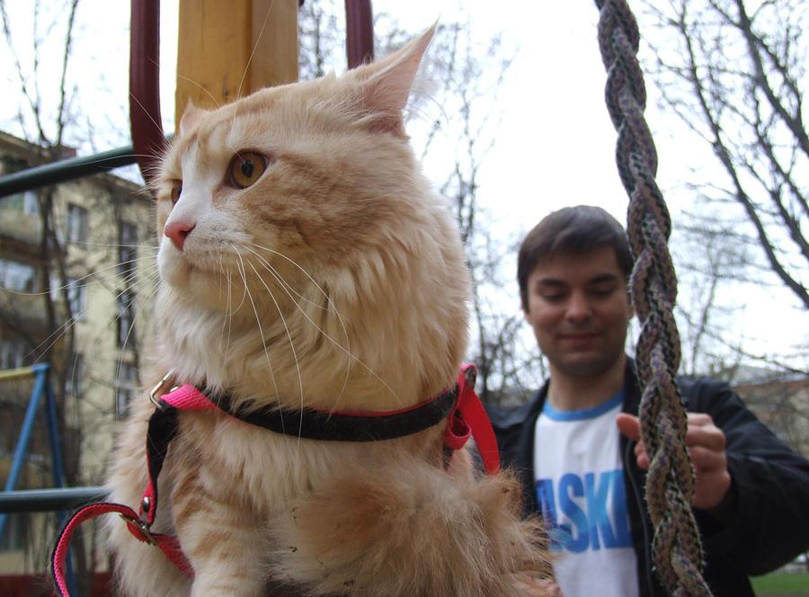 Хозяева кота-клептомана предложили соседям вернуть украденные вещи