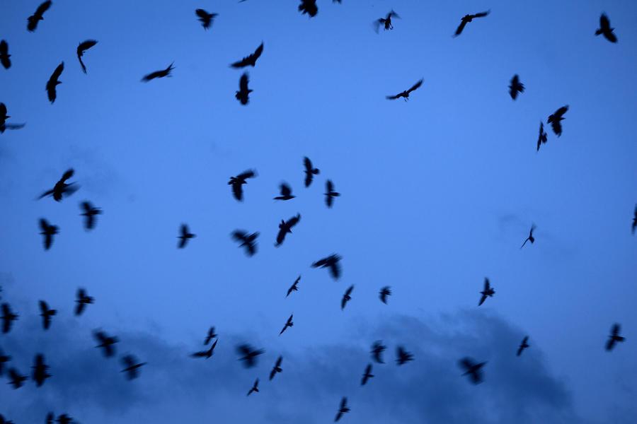 Учёные: Птицы чувствуют приближение торнадо
