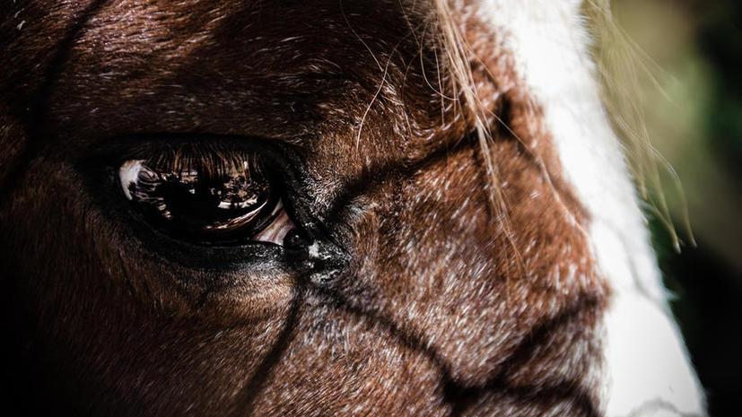 Американский суд может признать лошадей опасными животными