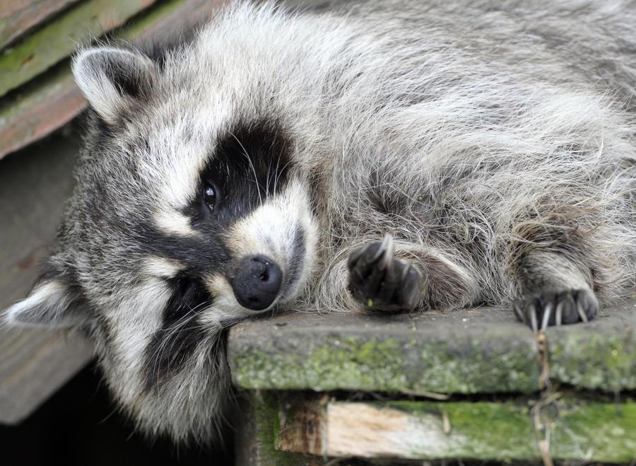 Обитатели Московского зоопарка приедут к детям прямо в школу