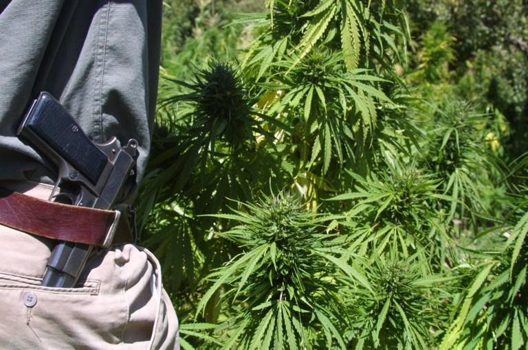 В штате Иллинойс не смогли запретить лицам, употребляющим марихуану в лечебных целях, владеть оружием