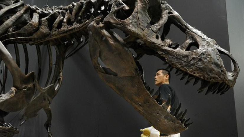 Скелеты сцепившихся в схватке динозавров уйдут с молотка за рекордную сумму