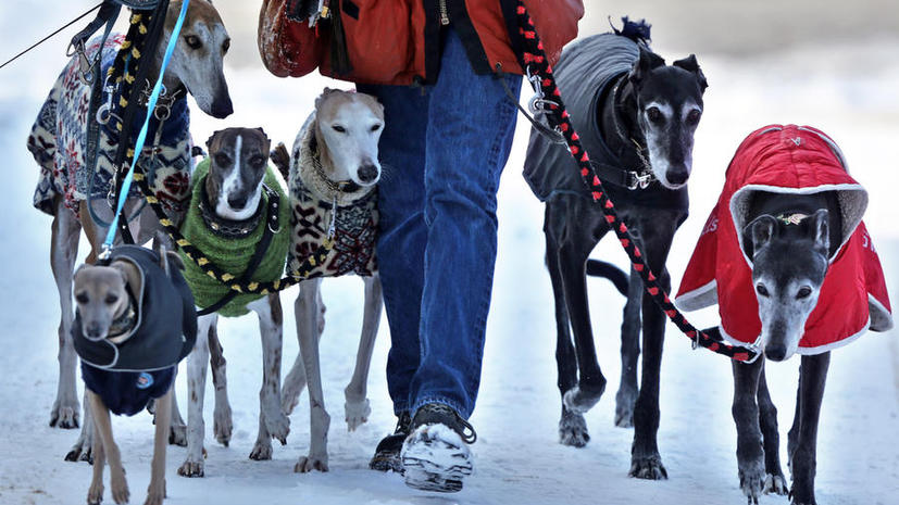 Общество создает «собачьи гетто» и «маргинализирует» этих домашних животных