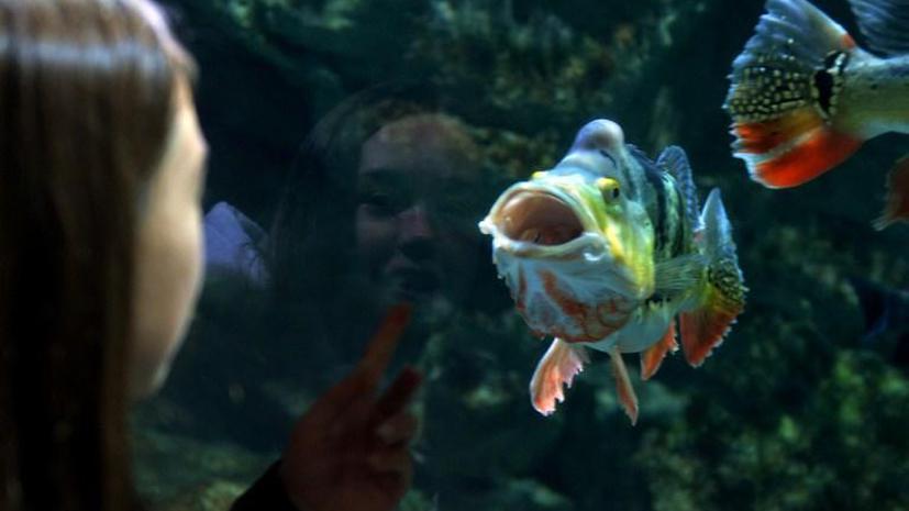 Лондонский зоопарк ищет самок редких рыб