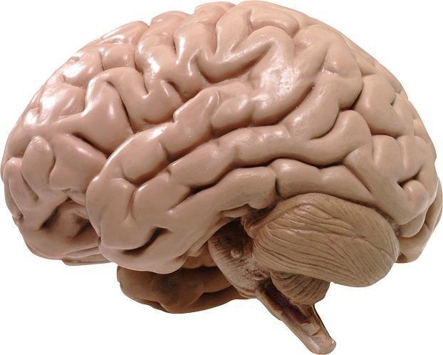 65% американцев уверены, что используют мозг лишь на 10%