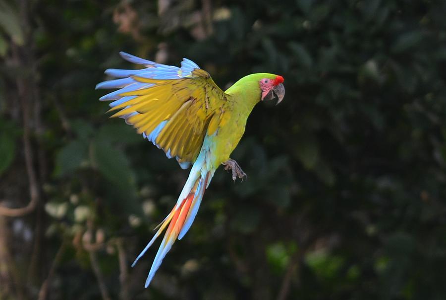 Свободу попугаям: зоопарки Коста-Рики выпустят животных обратно в дикую природу
