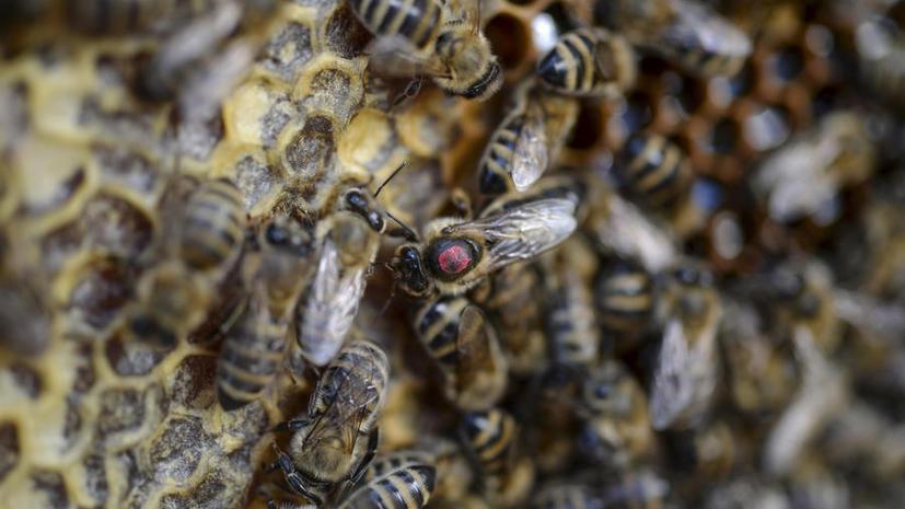 В США водитель погиб, врезавшись в заброшенный дом с дикими пчёлами